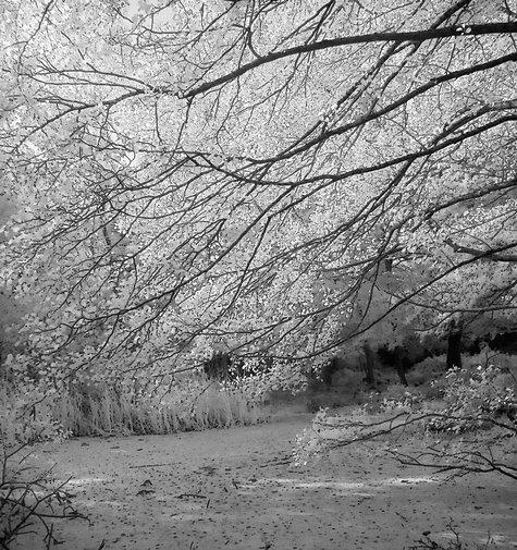 Branchery