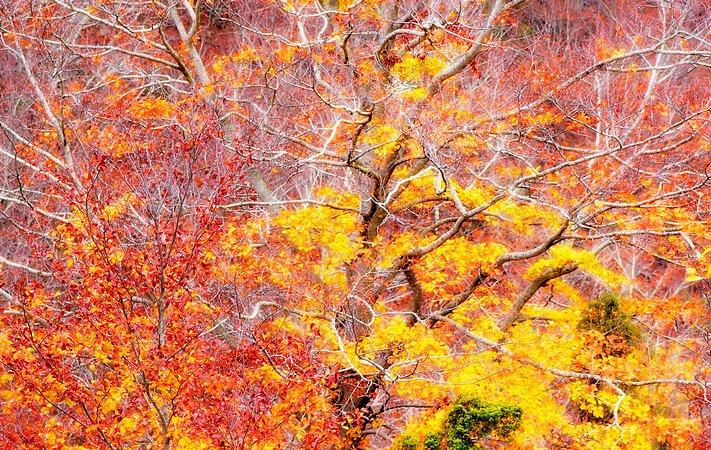 Dreamy foliage