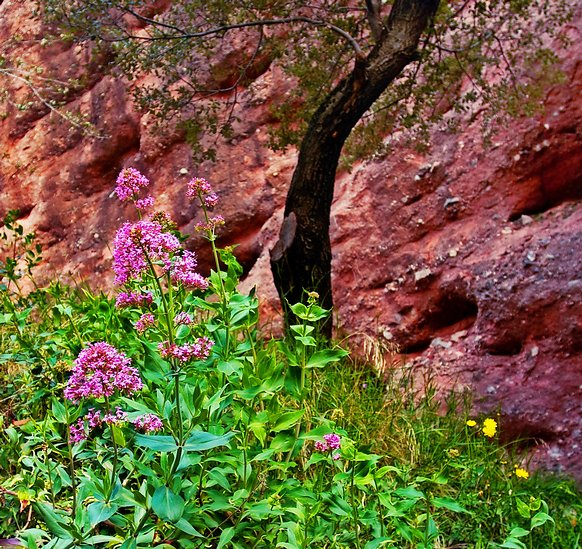Spring and red rock