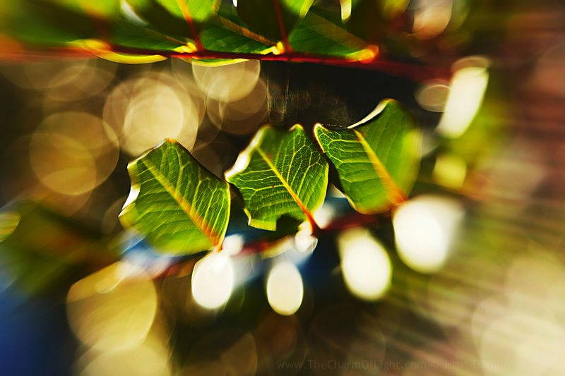 Three leaves and light