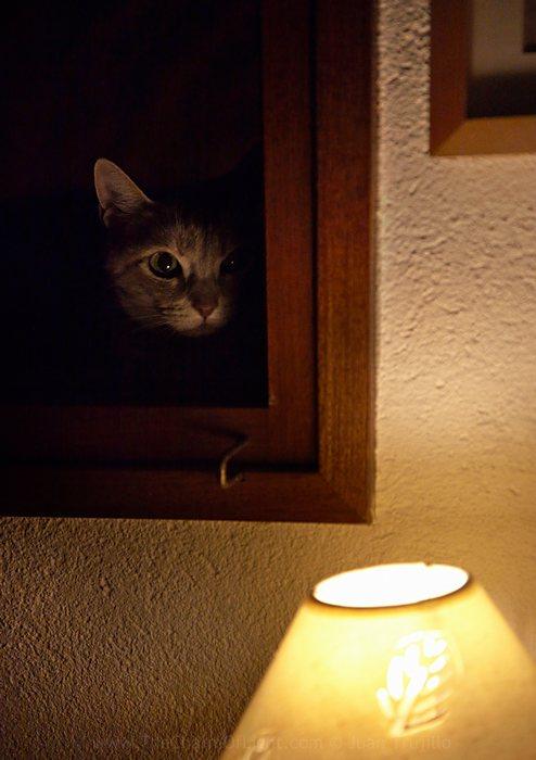 Extern observer